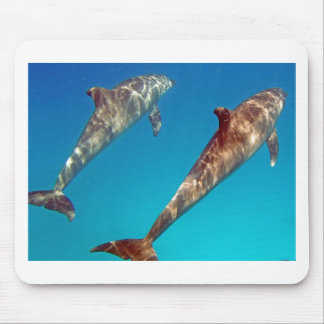 snorkeling with dolphin mouse pad