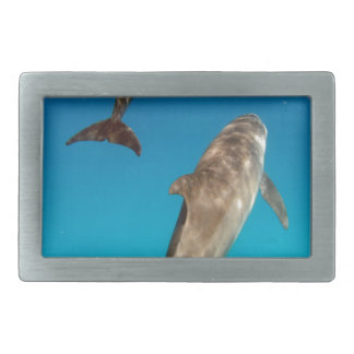 snorkeling with dolphins belt buckle