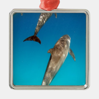 snorkeling with dolphins metal ornament