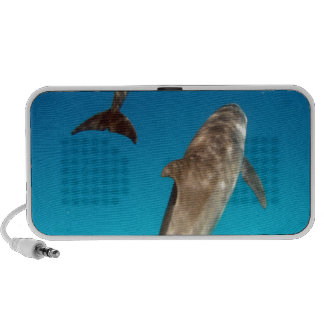 snorkeling with dolphins iPhone speaker
