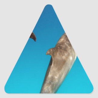 snorkeling with dolphins triangle sticker
