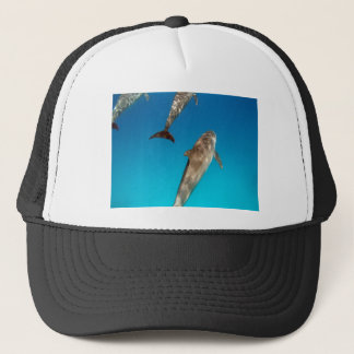 snorkeling with dolphins trucker hat