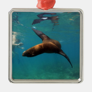 Snorkeling with playful sea lion Galapagos Islands Christmas Ornament