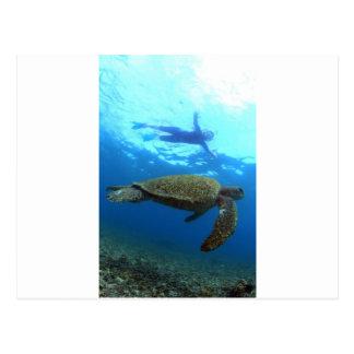 Snorkeling with sea turtle Galapagos Islands Postcard