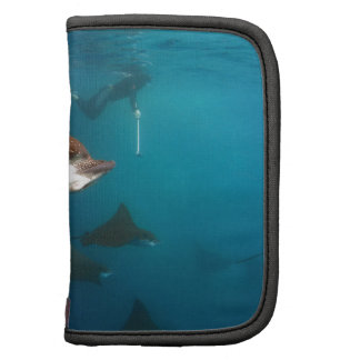 Snorkeling with spotted eagle rays folio planner