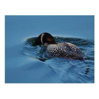 Snorkelling for dinner postcard