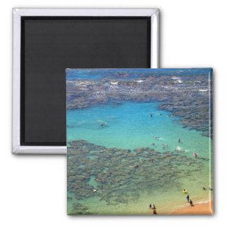 Snorklers en la bahía de Hanauma, Oahu, Hawaii Imán Cuadrado