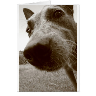 snout card