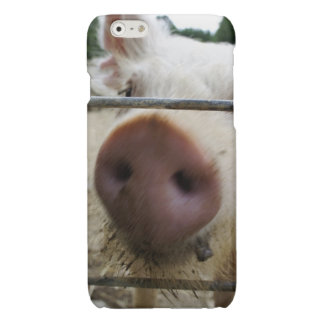 Snout Glossy iPhone 6 Case