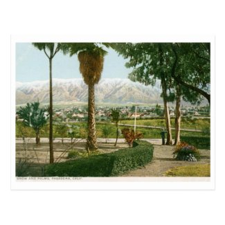 Snow and Palms, Pasadena CA Vintage Postcard