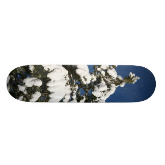snow and sun skateboard deck