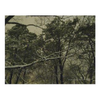 Snow at Dusk Postcard