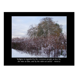 Snow, Bamboo and Trees with Seneca Quote Postcard