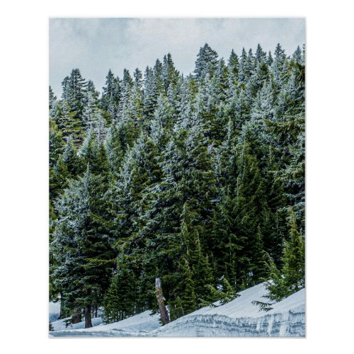Snow Bank Woodlands // Pine Tree Forest
