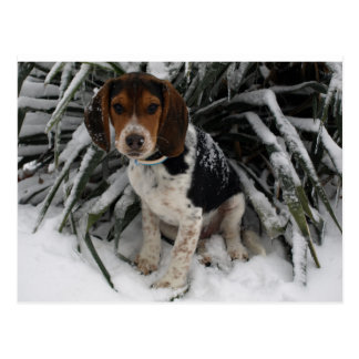Snow Beagle - Cute Snoopy Puppy Dog Winter Post Cards