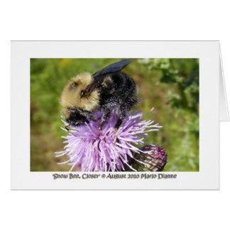 'Snow Bee, Closer' Card