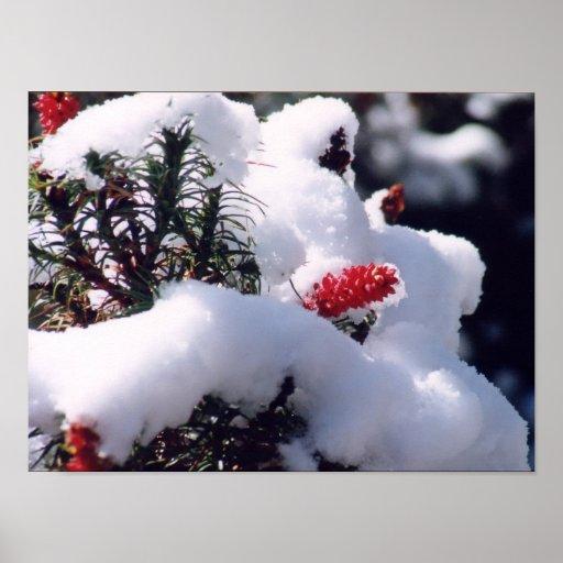 Snow Berries Print