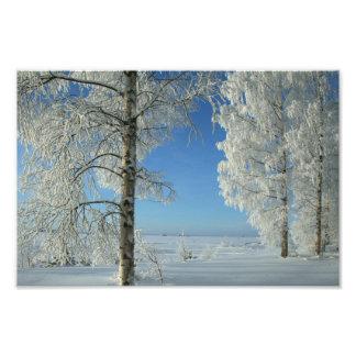 Snow Birches Photo Print