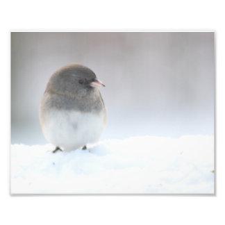 Snow bird in the snow photographic print