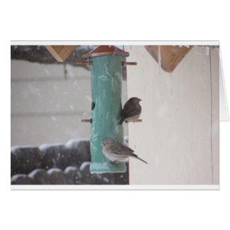 Snow Birds Card