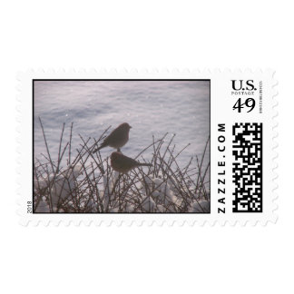 Snow Birds Postage Stamp