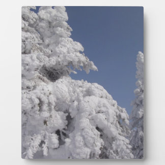 Snow Blanketed Pine Trees Plaque
