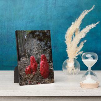 Snow Blossoms Plaque