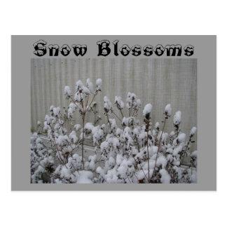 Snow Blossoms Postcard
