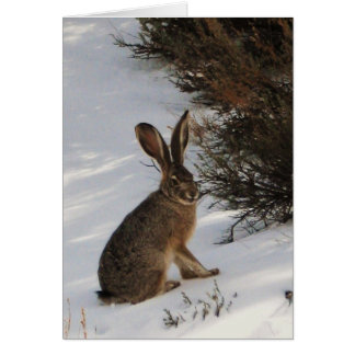 Snow Bunny Card