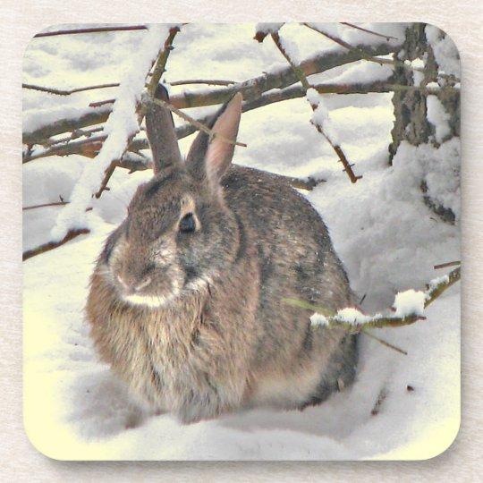 Snow  Bunny Coaster