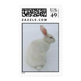 Snow Bunny Stamp