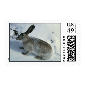 Snow Bunny Stamps