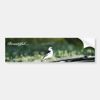 Snow Bunting Bumper Stickers
