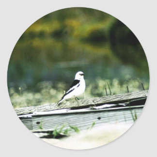 Snow Bunting Classic Round Sticker