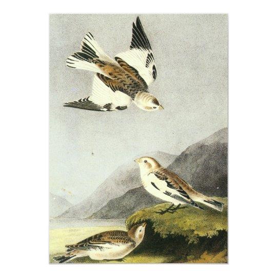 Snow Bunting - John James Audubon Card