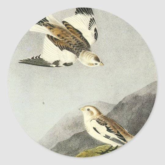Snow Bunting - John James Audubon Classic Round Sticker