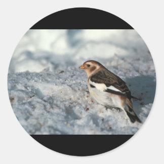 Snow Bunting, non breeding plumage Round Sticker