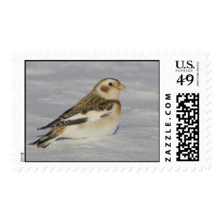 Snow Bunting Postage Stamp