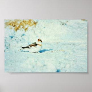 Snow Bunting Print