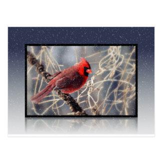 Snow Cardinal Postcard