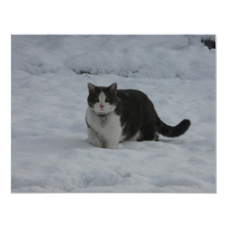 snow cat card