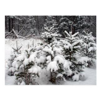 Snow Coverd Future Christmas Trees Postcard
