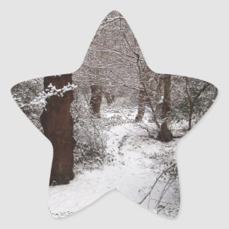 Snow Covered Ancient Woodland Star Sticker