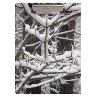 Snow-covered Branches Clipboard