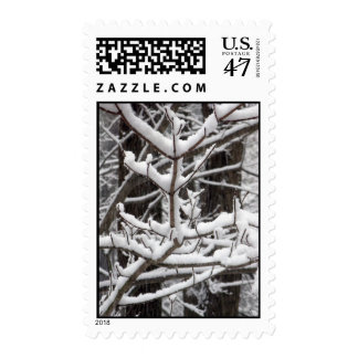 Snow-covered Branches – Medium stamp