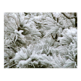 Snow Covered Branches Postcard