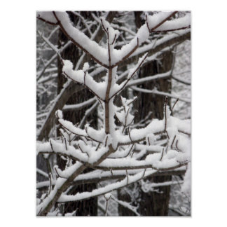 Snow-covered Branches Poster