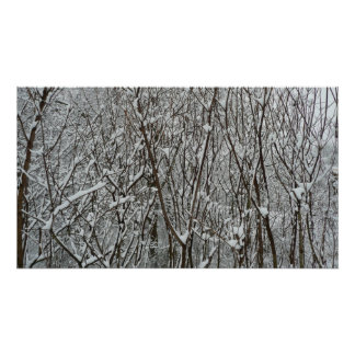 Snow Covered Branches Print