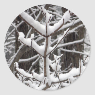 Snow-covered Branches Round Sticker