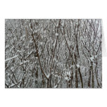 Snow Covered Branches Winter Abstract Photography Card